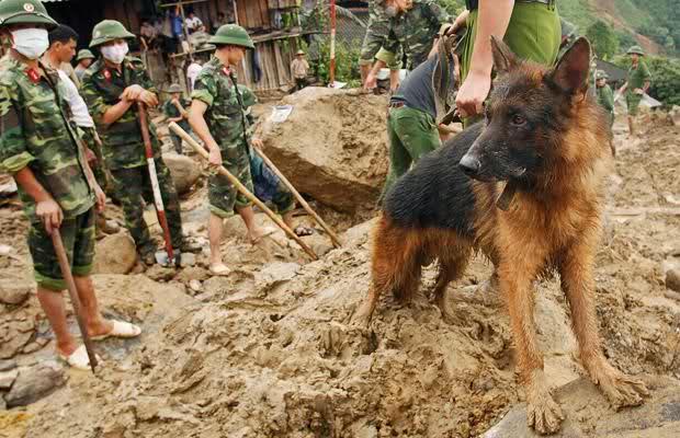 Примерно так будет выглядеть ваша собака если пойдет в армию с вами