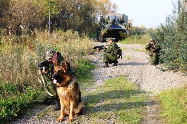 Солдат с собакой на спец. операции