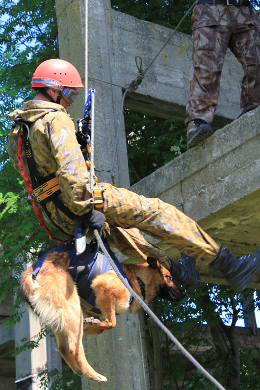 на тренировке при штурме здания с собакой