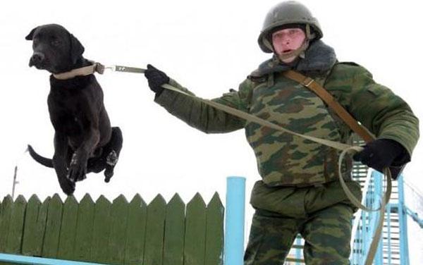 В армию с собакой
