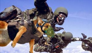 Собака-вдвшница со своим хозяином совершает прыжок с парашютом